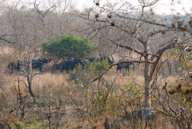 Elefant spotting!