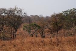Elefants on the move